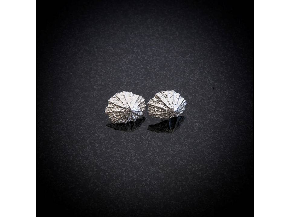 Baby Silver Limpet Stud Earrings by Patricia Dudgeon Designs