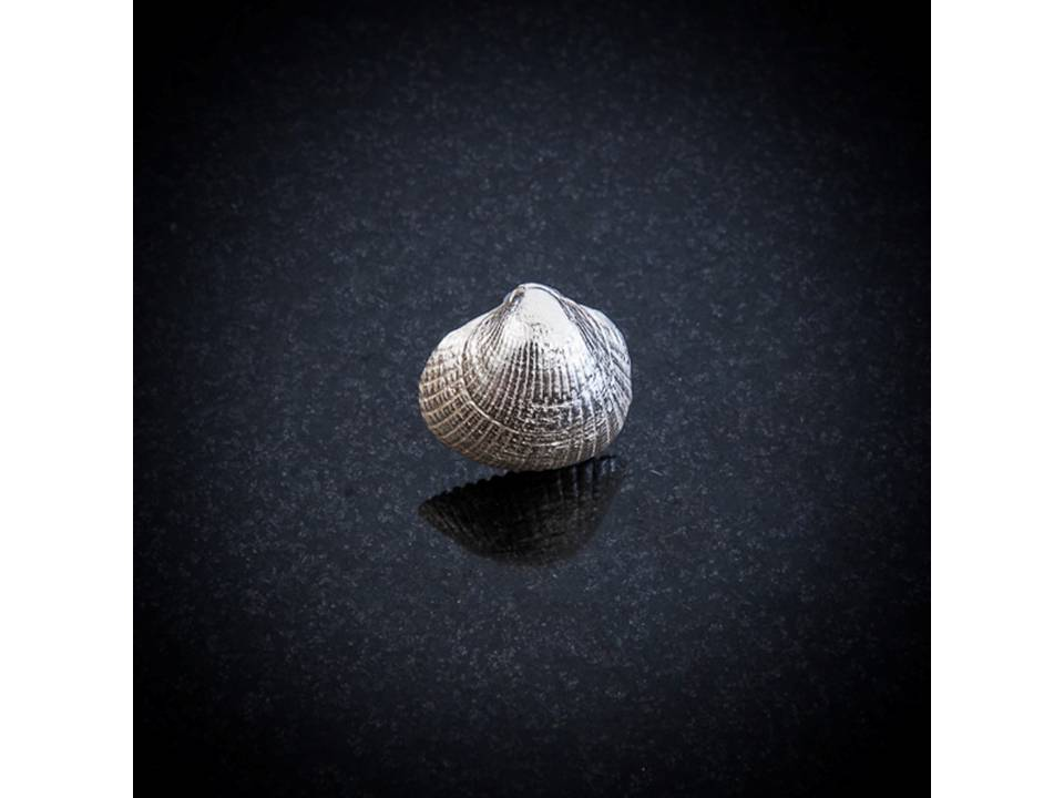 Silver Scallop shell stud earring by Patricia Dudgeon Designs